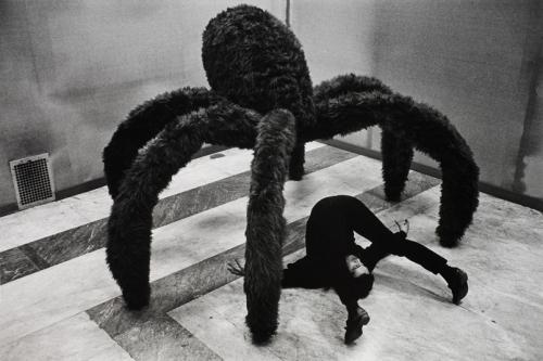 spider-claudioabatepinopascal.jpg